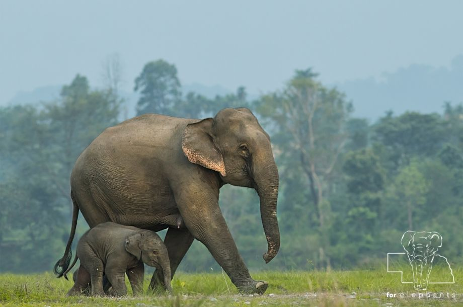 Six Facts About Baby Elephants