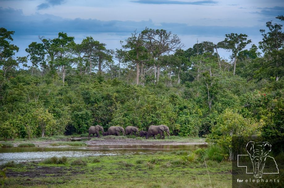 Four facts about the African forests and wildlife