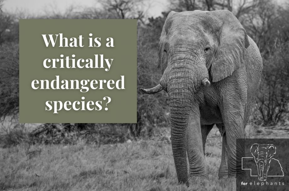 What is a critically endangered species?