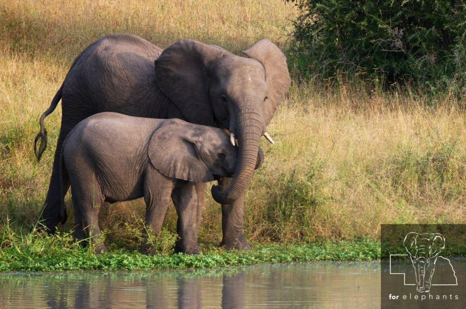 Four animals that are great mothers