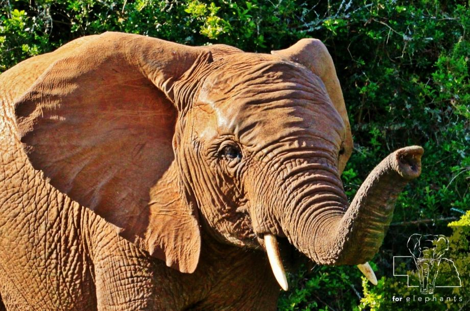 What you need to know about an elephant's skin