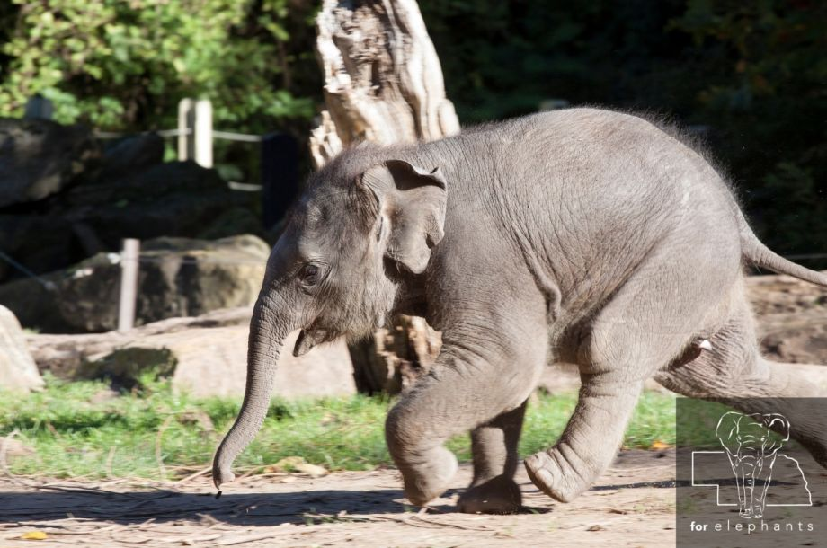 Five of the biggest baby animals