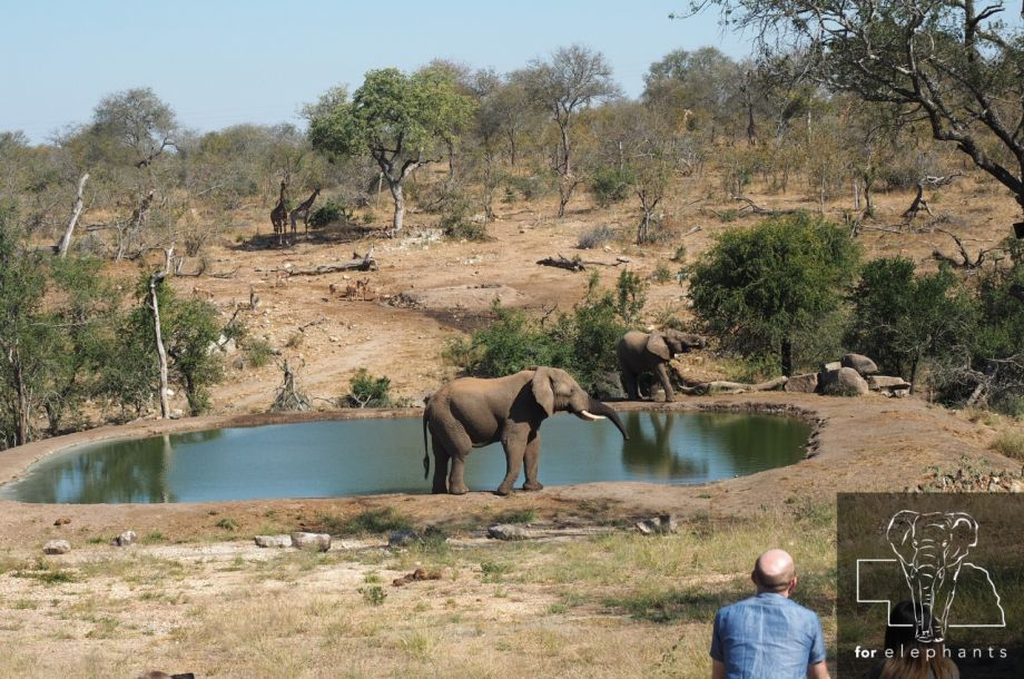 The role of elephants as gardeners and landscapers