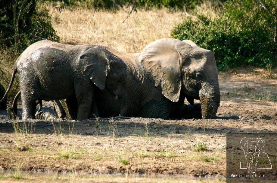 5 Facts About How Elephants Sleep