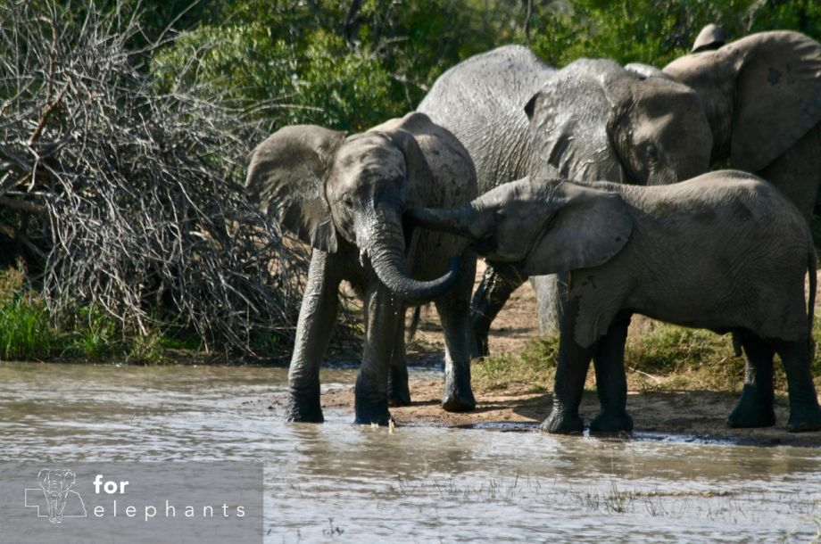 Get to know the African elephants