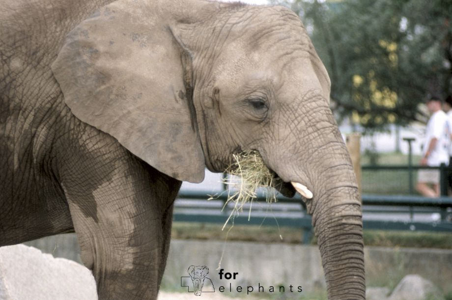 The importance of research and conservation action for elephants in zoos