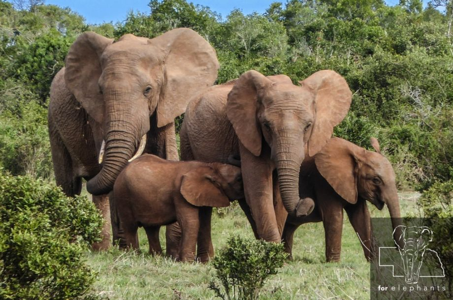 25 facts about elephants