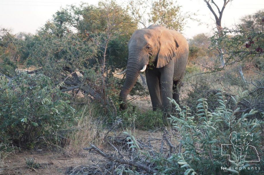 Five Interesting Facts About African Elephants