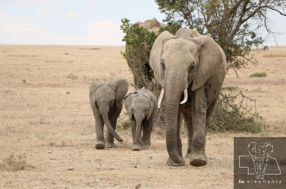 The trunk of an elephant