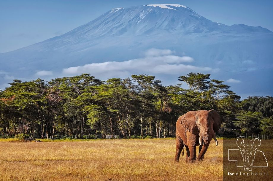 What are Africa's big five animals?