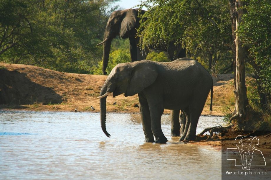 UPDATED: Get to know the African elephants